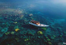 Коральный риф - Индонезия - живые обои