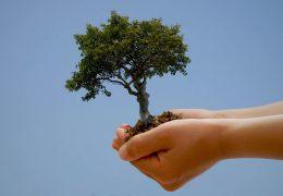 День Земли - живые обои