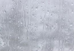 Мокрое стело со скатывающимися каплями воды - живые обои